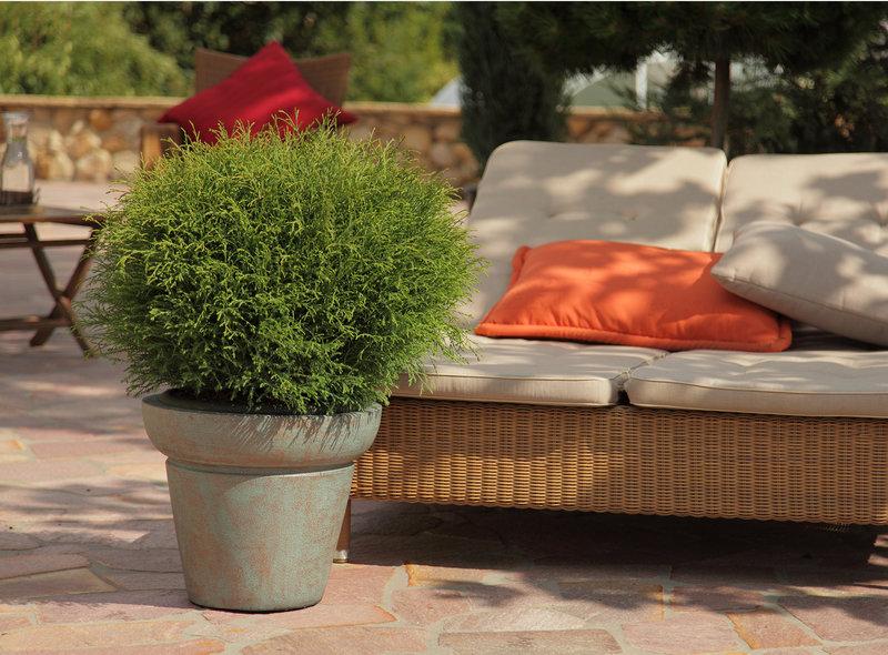 Outdoorküche Garten Xxl : Xxl pflanzen einfach überragend