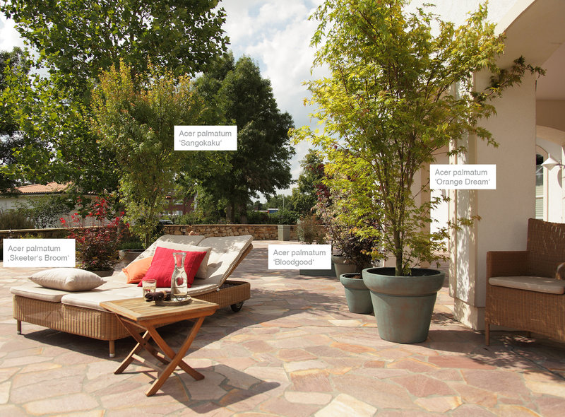 asiaterrasse xxl pflanzen. Black Bedroom Furniture Sets. Home Design Ideas