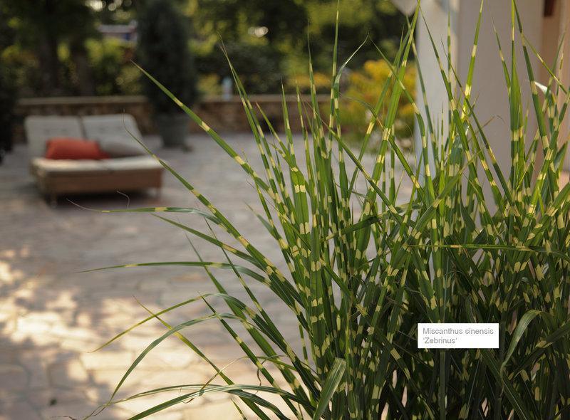 Gr ser xxl pflanzen - Gartengestaltung mit bambus ...