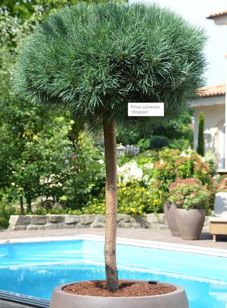 mediterrane pflanzen balkon
